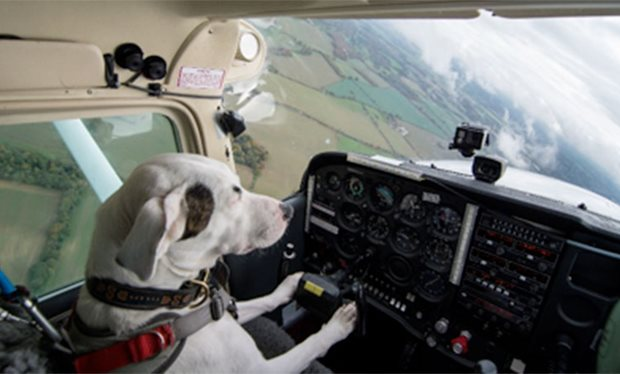 This_dog_was_less_than_24_hours_from_being_put_down___now_it_can_fly_a_plane